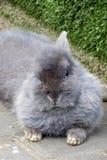 El conejo Fotografía de archivo libre de regalías