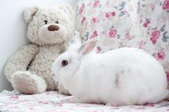 El conejo blanco hermoso se está sentando al lado de un oso de peluche Foto de archivo libre de regalías