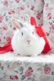 El conejo blanco hermoso se está sentando en el sofá Imagen de archivo