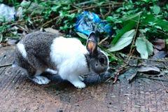 el conejo Blanco-marrón es cinco años Es un animal hermoso foto de archivo libre de regalías