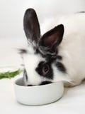 El conejo come el alimento Imagenes de archivo