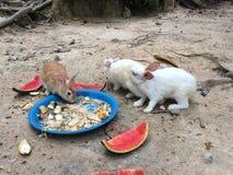 El conejo come la comida Fotos de archivo