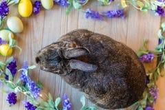El conejo de conejito de Gray Easter con la lila púrpura de la primavera florece y eggs en el tablero de madera, visión superior Fotos de archivo libres de regalías