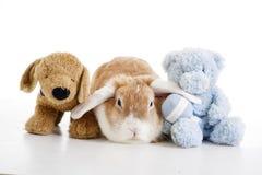 El conejo de conejito de pascua poda la foto Lindo pode el conejo anaranjado espigado Conejo de conejito espigado blanco de la fr Imagen de archivo