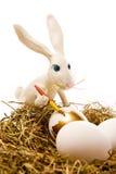 El conejo de pascua pinta el huevo Imagen de archivo libre de regalías