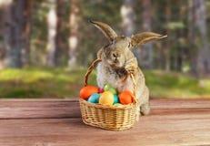 El conejo de Pascua se sienta con la cesta al aire libre Imagen de archivo libre de regalías