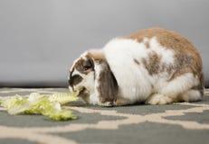 El conejo dice crujido imagen de archivo