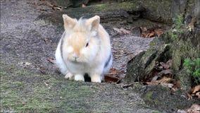 El conejo enano sacude su piel almacen de metraje de vídeo