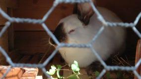 El conejo manchado come las hojas del abedul que se sientan en una jaula almacen de metraje de vídeo