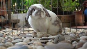 El conejo se está sentando metrajes