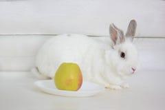 El conejo se está sentando en el piso cerca de una placa con una manzana Imagen de archivo libre de regalías