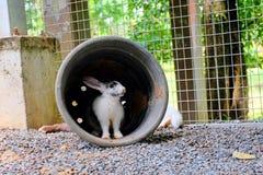 El conejo vive en su agujero Foto de archivo
