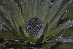 El conifer4 Imagen de archivo