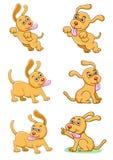 El conjunto del perro Imagenes de archivo