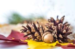 El cono del pino, la bellota y el abedul del otoño hojean Foto de archivo