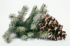 El cono grande del árbol de pino le gusta la decoración a la tarjeta del día de fiesta Imagen de archivo