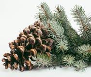 El cono grande del árbol de pino le gusta la decoración a la tarjeta del día de fiesta Foto de archivo