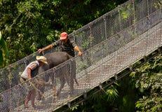 El conseguir del toro sheparded a través de un puente del metal en Nepal foto de archivo