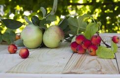 El contraste de manzanas pequeñas y grandes Foto de archivo libre de regalías