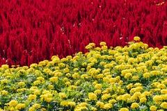 el contraste del rojo y del amarillo fotografía de archivo libre de regalías