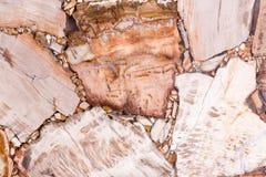 El contraste natural petrificó la textura de madera en tono marrón y ligero imagenes de archivo