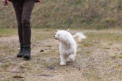 El controlador y el perro con cresta chino está caminando en tiempo fangoso fotos de archivo libres de regalías