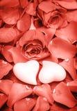 El coral subió boda de día de San Valentín de los corazones de las flores imagen de archivo libre de regalías