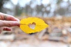 El corazón Imagen de archivo libre de regalías