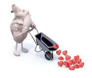 El corazón con los brazos y las piernas lleva una carretilla con los corazones Imagen de archivo libre de regalías
