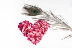 El corazón de los pétalos de Rose rojos y el pavo real empluman foto de archivo