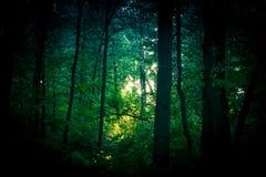 El corazón del bosque Imagen de archivo libre de regalías