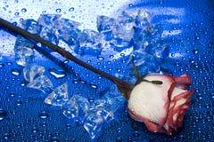 El corazón del hielo con se levantó Fotografía de archivo libre de regalías