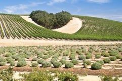 El corazón del país vinícola Fotografía de archivo
