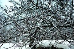 El cordón hermoso nevado de las ramas de árbol puso en contraste en el resto nevoso foto de archivo libre de regalías