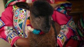 El cordero se sostuvo por la mujer suramericana en vestido tradicional metrajes
