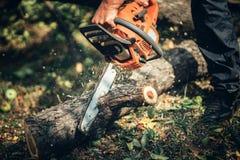 El cortar del cortador, de madera y de la madera del tronco Registros masculinos del corte del silvicultor Fotos de archivo libres de regalías