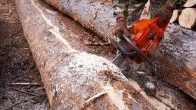 El cortar a través de la madera con la motosierra en la cámara lenta almacen de video