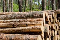 El corte del bosque, pino cortado, registros del árbol de abedul arregló en orden en cúbico Imágenes de archivo libres de regalías