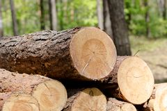 El corte del bosque, pino cortado, registros del árbol de abedul arregló en orden en cúbico Imagenes de archivo