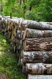 El corte del bosque, pino cortado, registros del árbol de abedul arregló en orden en cúbico Fotos de archivo libres de regalías
