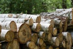 El corte del bosque, pino cortado, registros del árbol de abedul arregló en orden en cúbico Imagen de archivo libre de regalías