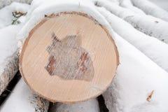 El corte del primer de cubierto con nieve aserró recientemente el abedul de madera en invierno Fotos de archivo