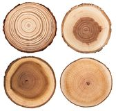 El corte transversal del tronco de árbol que mostraba los anillos de crecimiento fijó aislado en el fondo blanco foto de archivo