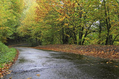 El Courel - Galicia. Road surrounded by a chestnut wood Royalty Free Stock Photography