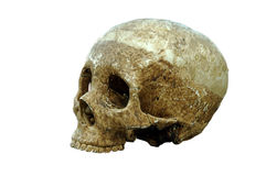 El cráneo Fotos de archivo