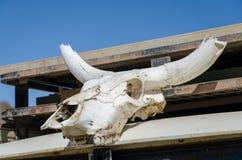 El cráneo blanco de la vaca con los cuernos impresionantes blanqueó por el sol del desierto Imagenes de archivo