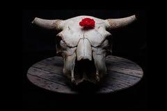 El cráneo de la vaca con subió fotografía de archivo