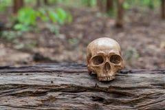 El cráneo se coloca en la madera Imagenes de archivo