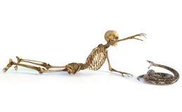 El cráneo y la serpiente Imágenes de archivo libres de regalías