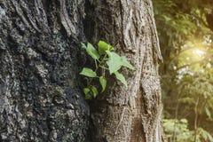 El crecimiento de árboles Imágenes de archivo libres de regalías
